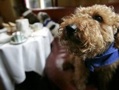 Les chiens dans un restaurant.